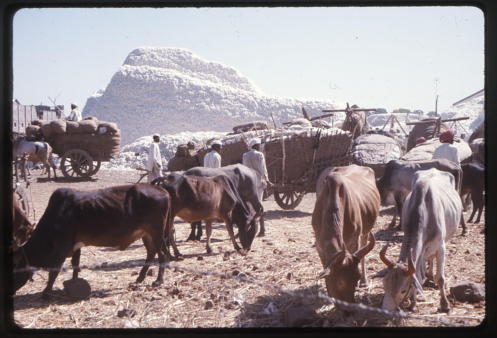 india1975-8